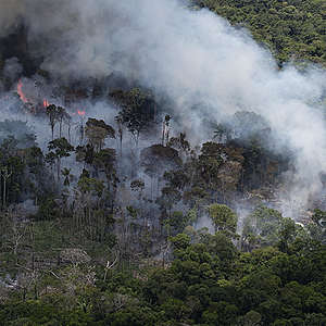 Greenpeace Responds to Amazon Forest Fires