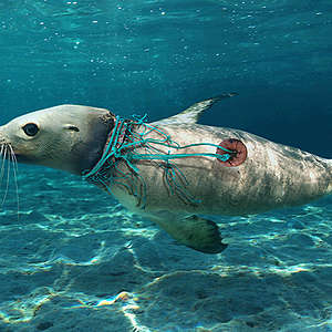 This is what Ghost Fishing does to the ocean