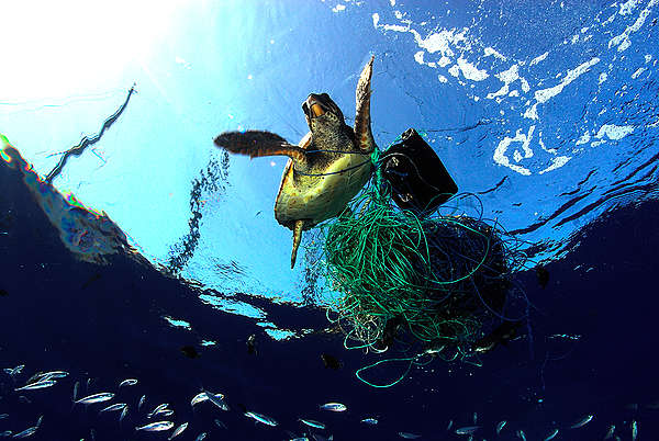 Turtle trappe din fishing line, ghost fishing gear, ghost fishing, plastic waste in the ocean, plastic killing turtle