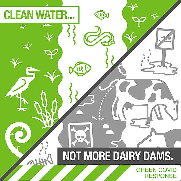 The Covid economic stimulus infrastructure package must protect clean water not build more dairy dams