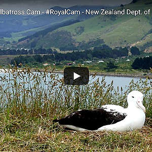 Wildlife and nature live stream webcams for your coronavirus lockdown