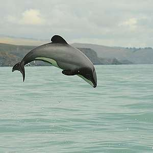 Dolphin Threat Management Plan promising, but not transformational