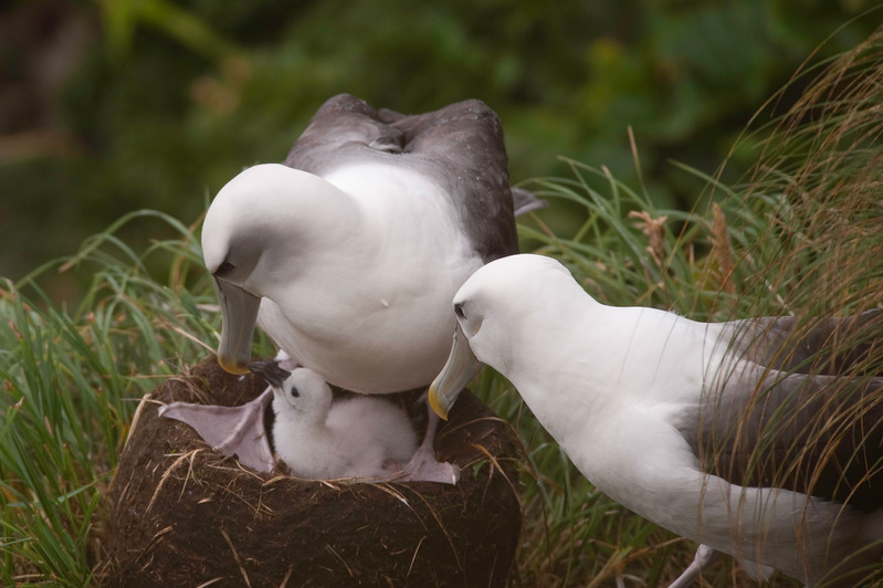 Govt's seabird plan of action panders to fishing industry