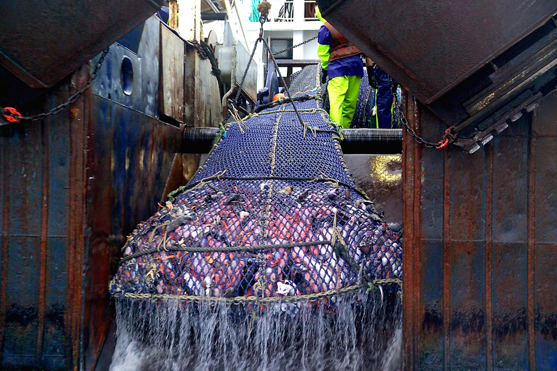 Bottom trawling, bottom trawling impacts, impacts of bottom trawling on ecosystems, orange roughy, New Zealand bottom trawling
