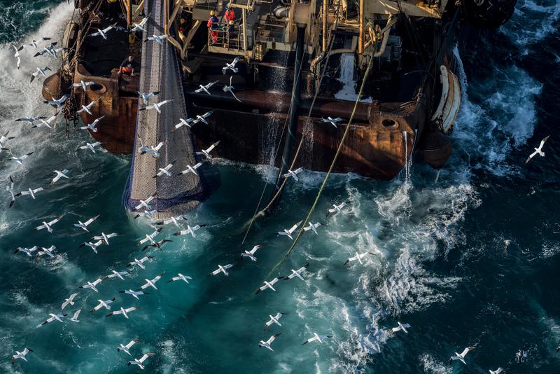 Trawling, herring, bottom trawling, deep sea trawling bycatch, what's the problem with bottom trawling