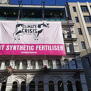 Greenpeace activists climb Fertiliser Association building to highlight industrial dairying's role in climate crisis