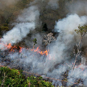 New images of illegal fires in the Amazon show destruction advances