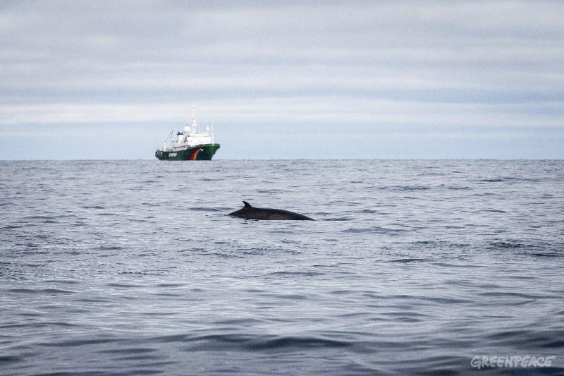 Bilde av vågehval utenfor Barensthavet