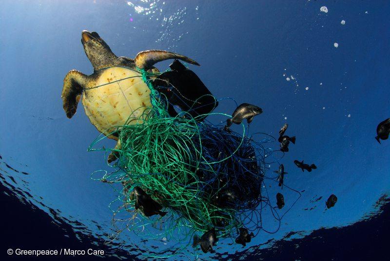 Havskilpadde som sitter fast i plastsøppel