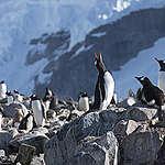 Gode nyheter for Antarktis