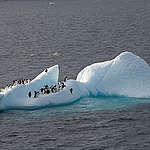 Norge ødela for viktig marint vern i Antarktis