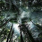 7 tips for å beskytte Amazonas-regnskogen