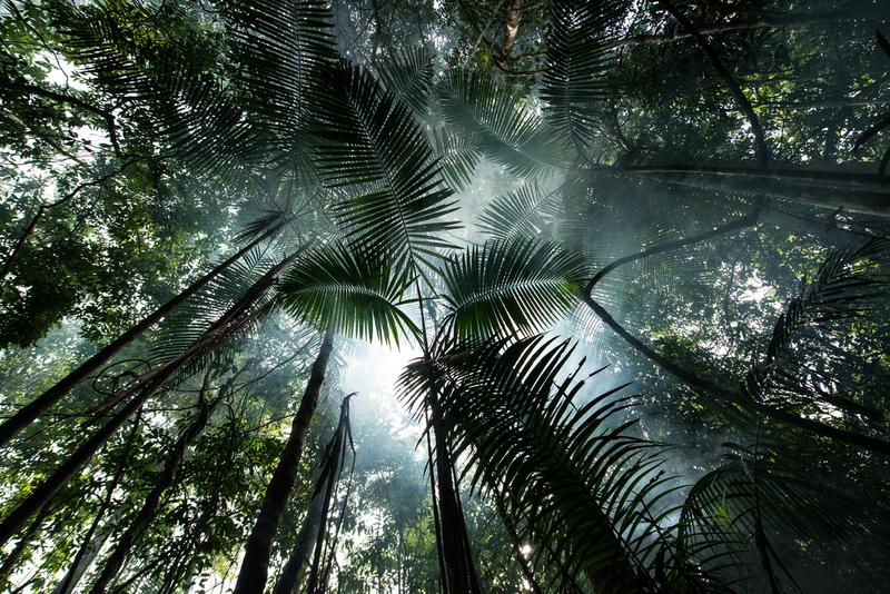 Artikel:  7 tips for å beskytte Amazonas-regnskogen