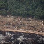 Amazonas' regnskog hugges ned i et skremmende tempo