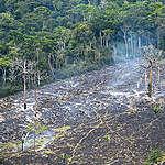 Er regnskogsatsingen verdt pengene?