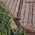 Greenpeace med krav til soyagigant: – Penger er det eneste språket Bolsonaro forstår