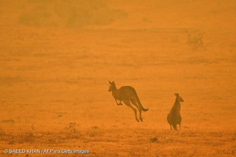 De katastrofale brannene i Australia – dette må du vite