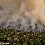 Raseringen av Amazonas fortsetter. Det må presset mot Bolsonaro også.
