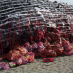 Whale Art Installation in the Philippines. © Greenpeace