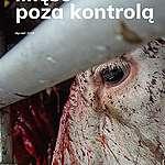 Mięso poza kontrolą