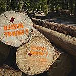 Nielegalne drewno w Puszczy Białowieskiej