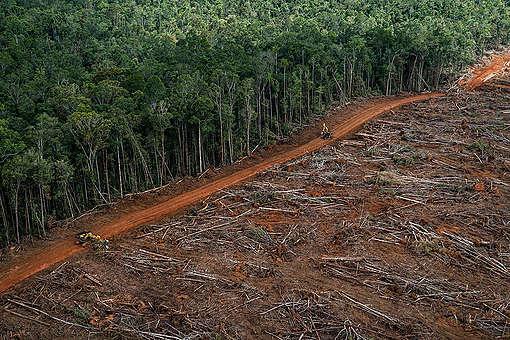 Wyrąb lasów deszczowych pod plantacje palmy olejowej