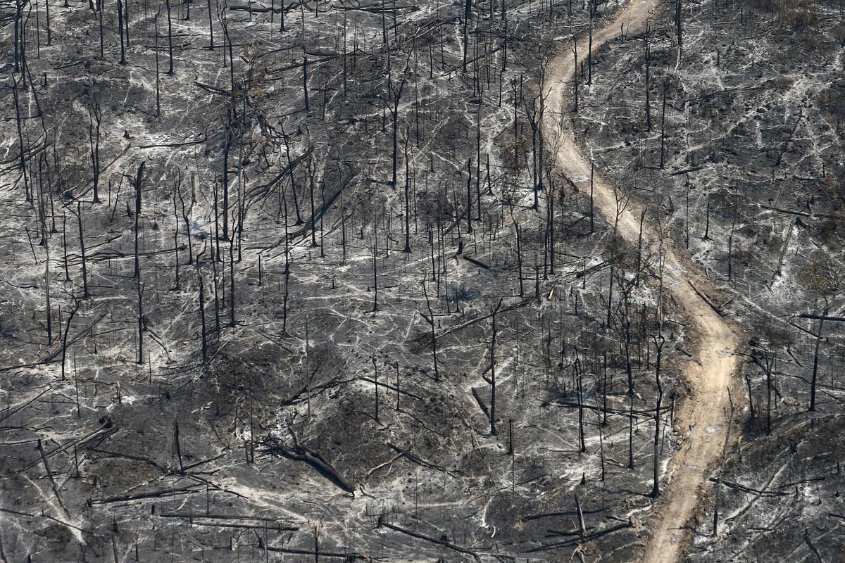 Wypalanie Puszczy Amazońskiej pod pastwiska