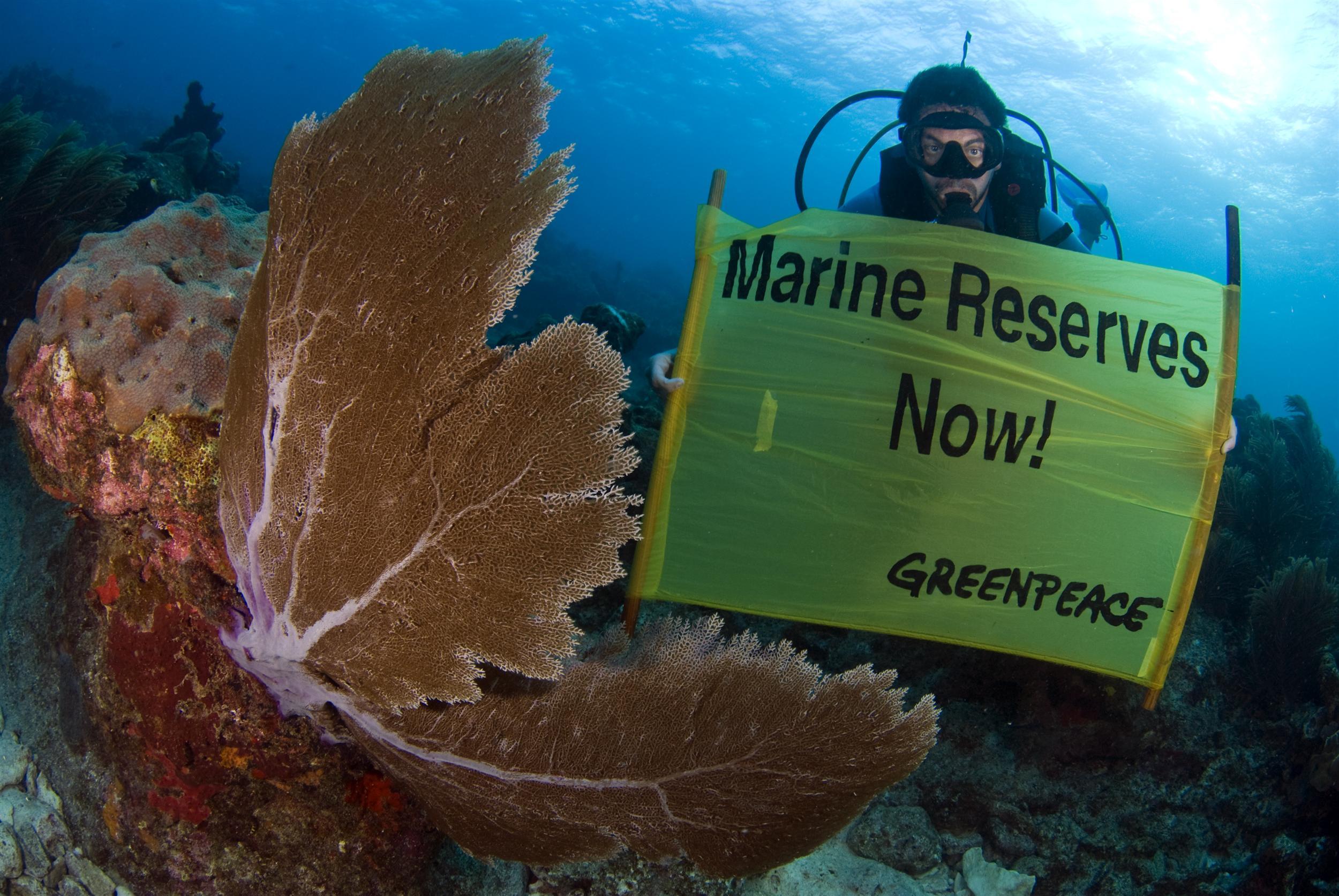 Apel o utworzenie rezerwatu morskiego w Zatoce Meksykańskiej
