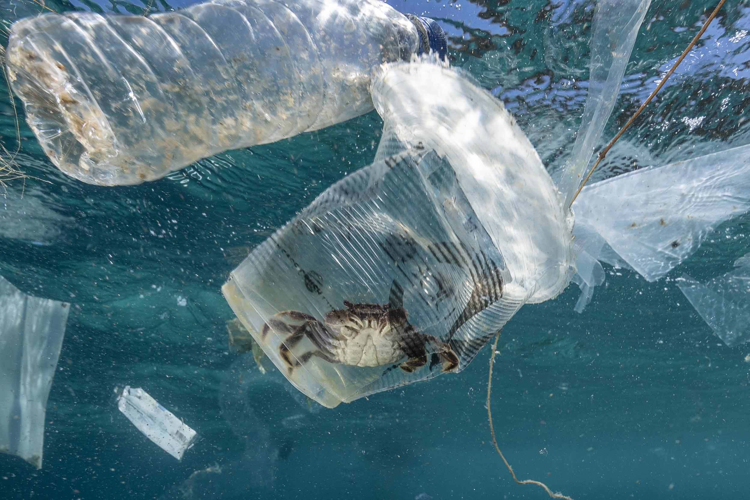 Krab uwięziony w plastikowych śmieciach, Filipiny