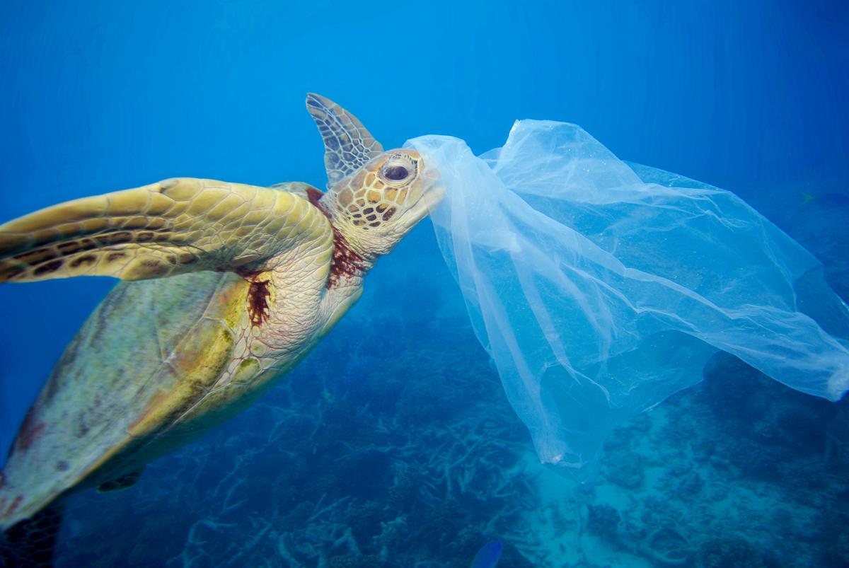 Żółw morski i plastik © Troy Mayne / Oceanic Imagery Publications
