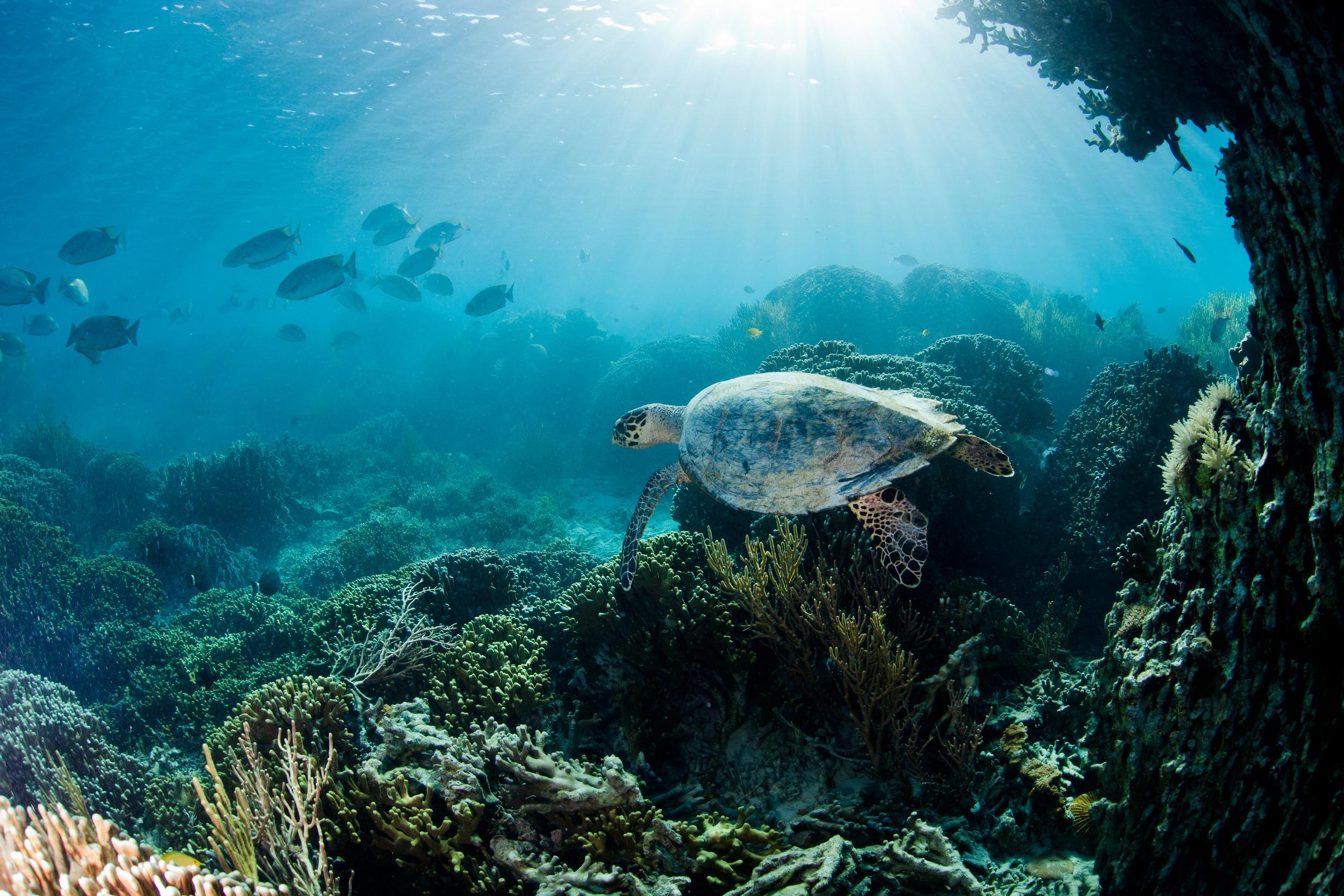 Żółw morski w parku narodowym Komodo