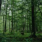 Dzisiejsza decyzja UNESCO to jednoznaczna niezgoda na dalszą eksploatację Puszczy Białowieskiej