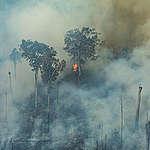Pożary trawią Puszczę Amazońską
