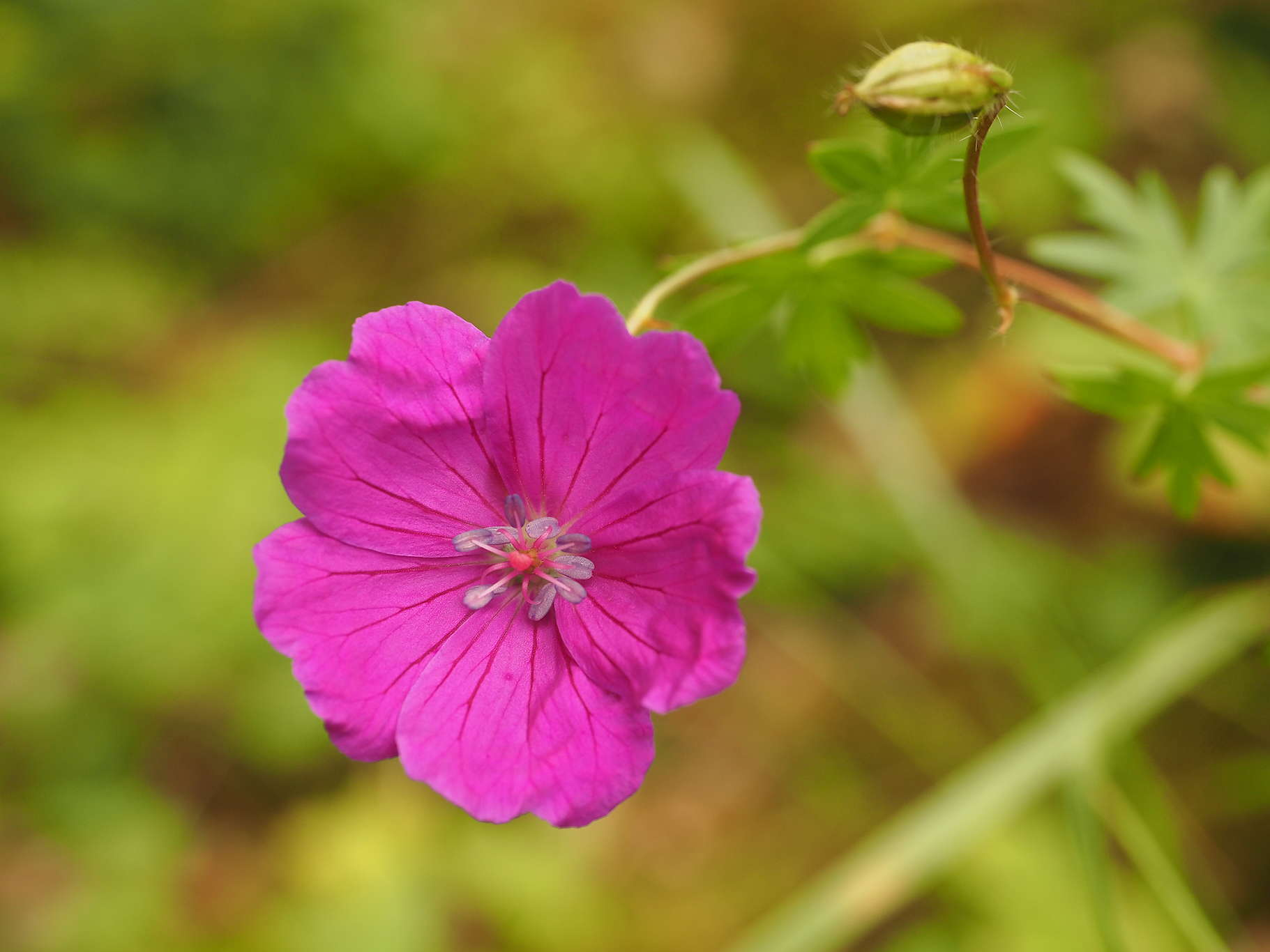 Kwiatek w Puszczy Białowieskiej