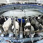 PE chce utrzymać obecny model rolnictwa UE, choć prowadzi on do katastrofy