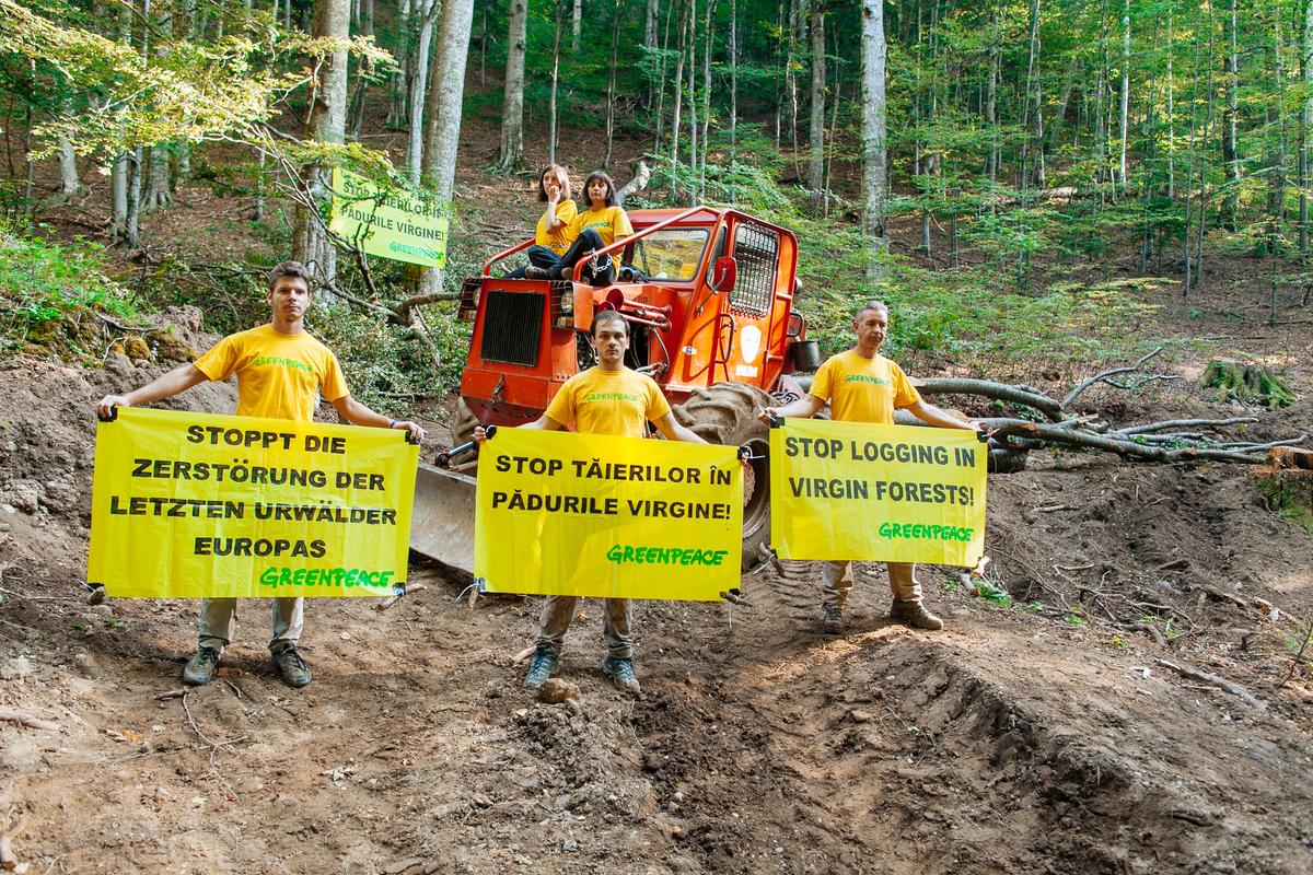 Protest în Masivul Ciucaș împotriva unei exploatări într-o pădure cvasivirgină.