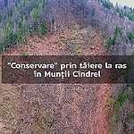 Direcția Silvică Sibiu și Garda Forestieră Brașov ignoră încălcări ale Codului Silvic