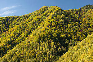Nordic Forest in Romania. © Markus Mauthe / Greenpeace