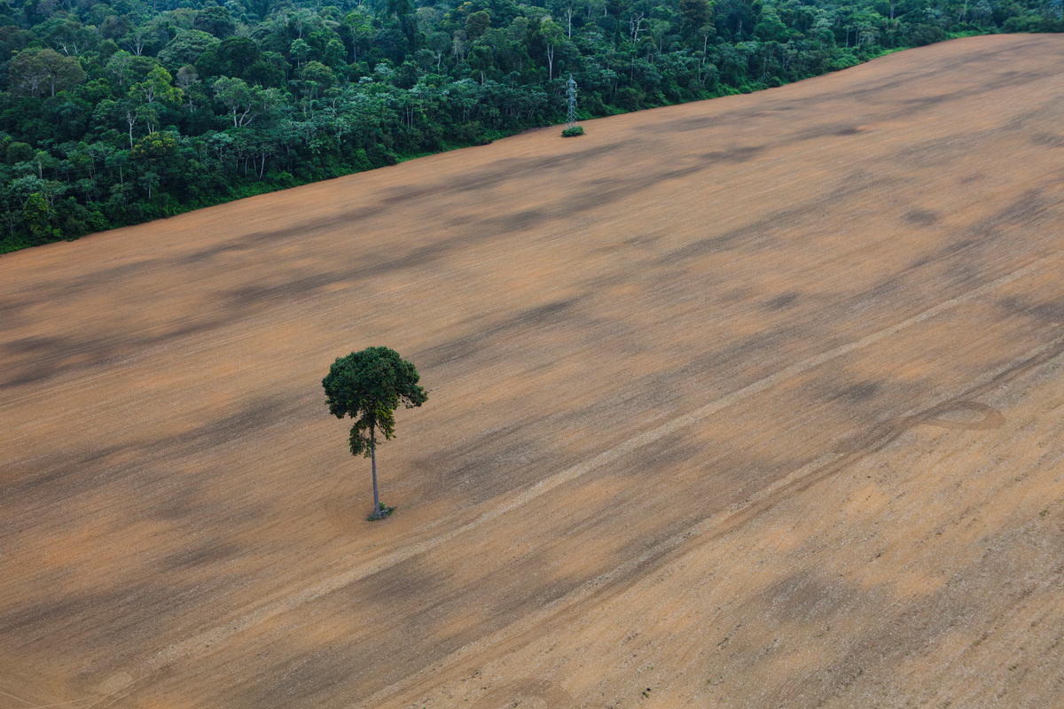 Deforested Area in the Amazon. © Daniel Beltrá / Greenpeace