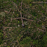 Deforested Area for Cattle Ranching in Brazil. © Marizilda Cruppe / EVE / Greenpeace