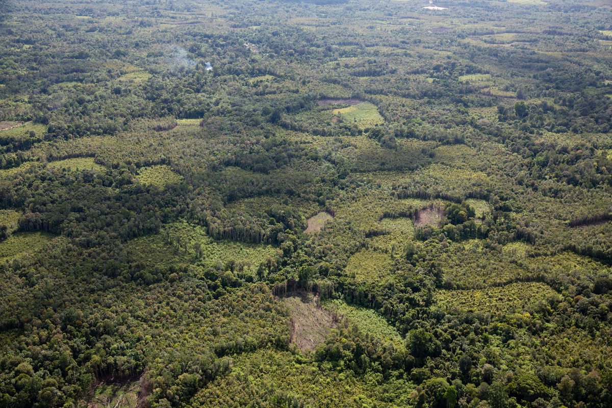 Clearance of High Carbon Stock (HCS) Forest Area in West Kalimantan. © Kemal Jufri / Greenpeace