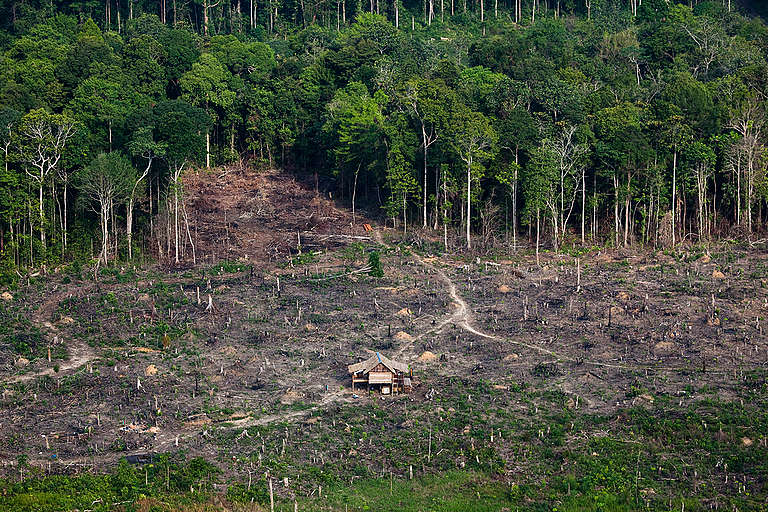 Deforestation in Sumatra. © Daniel Beltrá / Greenpeace