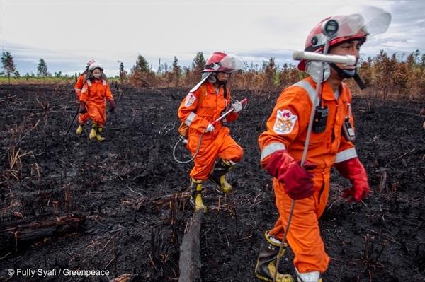 FFP team walk on burned peatland.