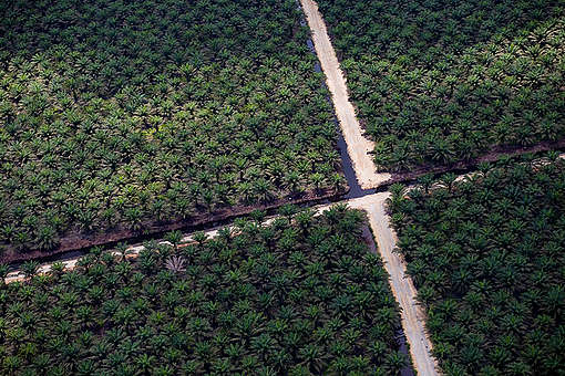 Palm Oil Plantations. © Greenpeace / Daniel Beltrá