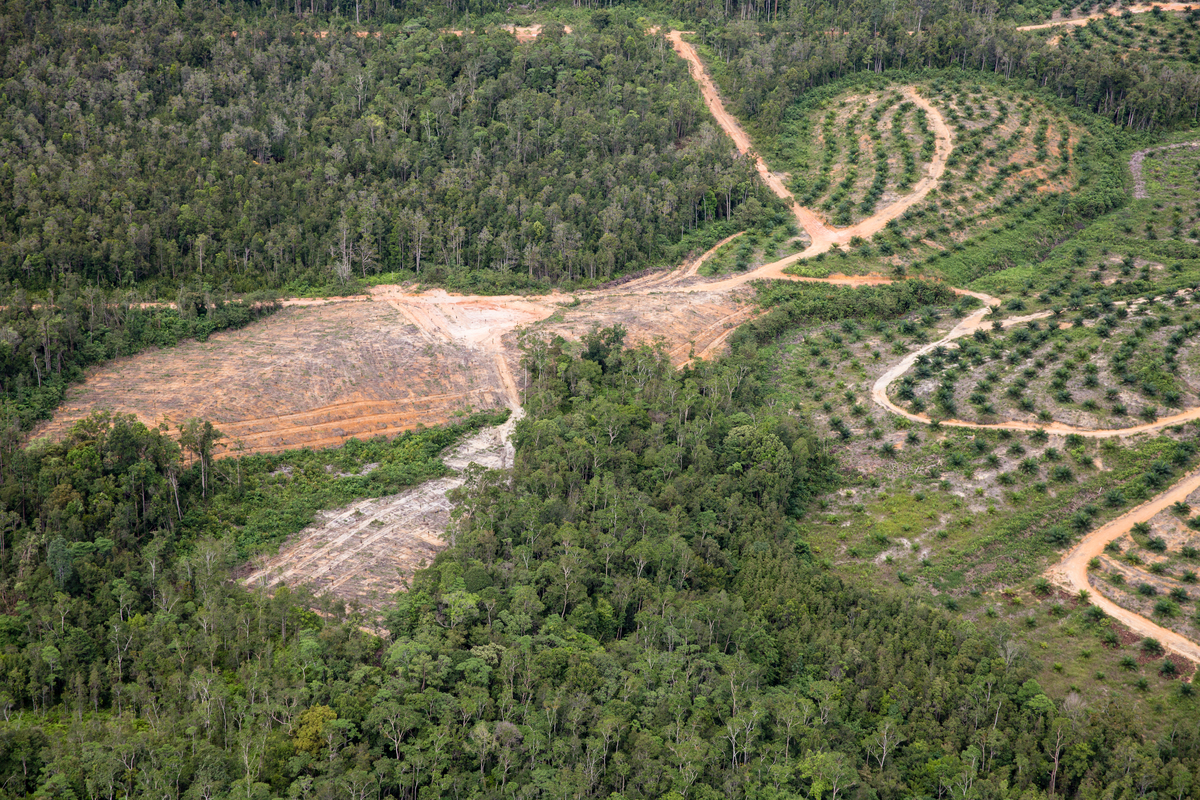 GAR Palm Oil Plantation in West Kalimantan. © Kemal Jufri / Greenpeace