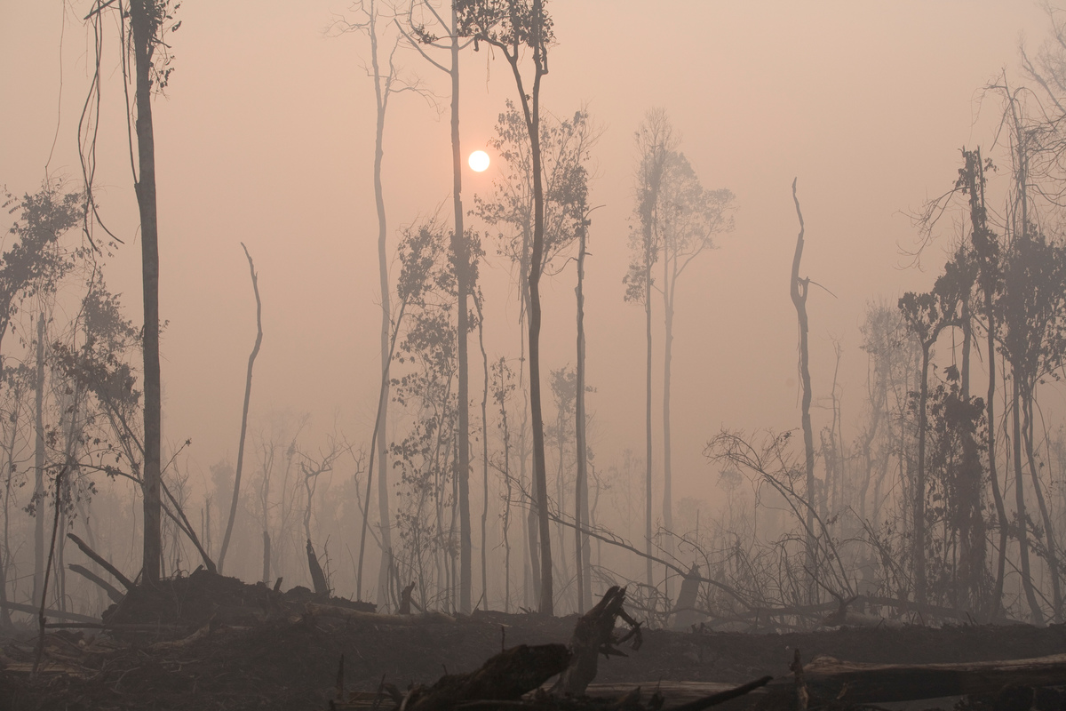 Aftermath of Forest Fire on the Kapuas River. © Greenpeace / Natalie Behring