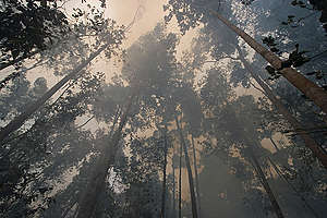Forest Fires in Indonesia. © Greenpeace / Vinai Dithajohn
