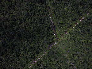Drainage Canal in IOI Concession in West Kalimantan. © Bjorn Vaugn / Greenpeace