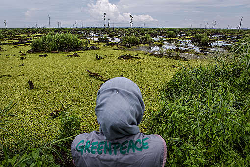 Bearing Witness in IOI Oil Palm Concession in West Kalimantan. © Ulet  Ifansasti / Greenpeace