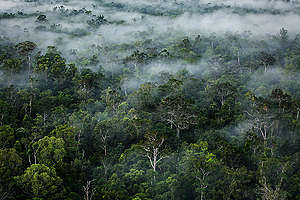 Primary Forest in Papua. © Ulet  Ifansasti / Greenpeace